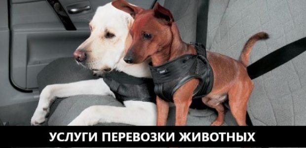 perevozka_sobak