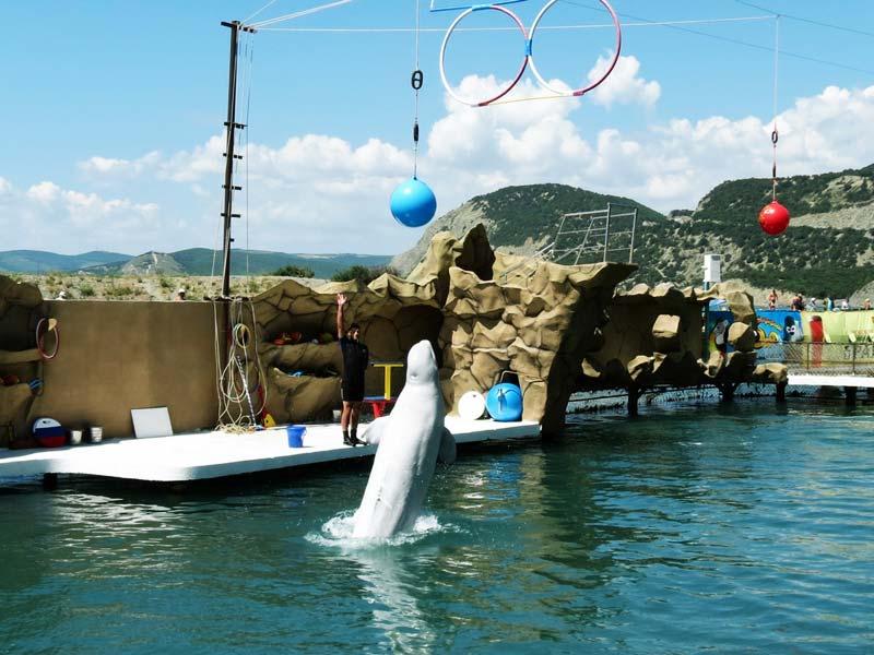 экскурсия в Дельфинарий Большой Утриш