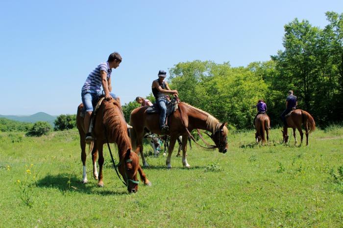 экскурсия на конные прогулки сукко