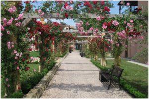 индивидуальные экскурсии по Анапе, экскурсия на алею роз анапа